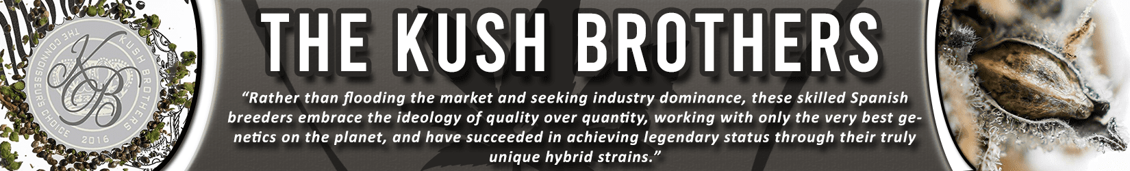 Cannabis Seeds Breeder - Kush Brothers