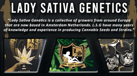 Cannabis Seeds Breeder - Lady Sativa