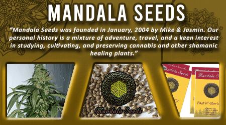 Cannabis Seeds Breeder - Manadala Seeds