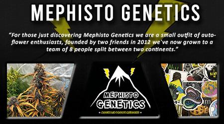 Cannabis Seeds Breeder - Mephisto Genetics