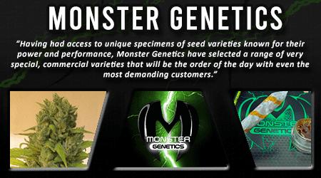 Cannabis Seeds Breeder - Monster Genetics