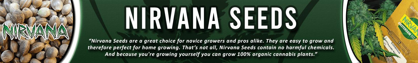 Cannabis Seeds Breeder - Nirvana Seeds