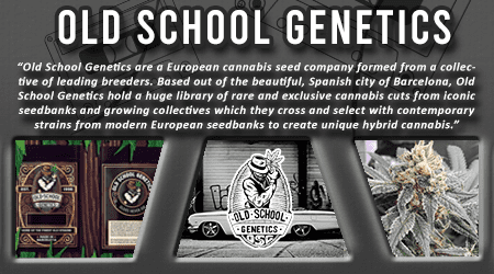 Cannabis Seeds Breeder - Old School Genetics