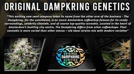 Cannabis Seeds Breeder - Original Dampkring Genetics