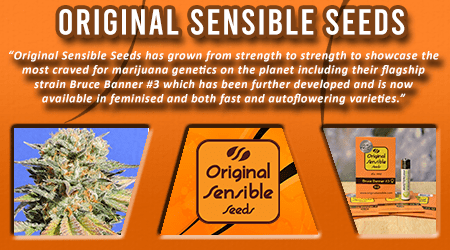 Cannabis Seeds Breeder - Original Sensible seeds