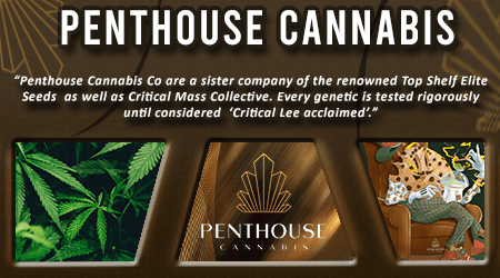 Cannabis Seeds Breeder - Penthouse Cannabis