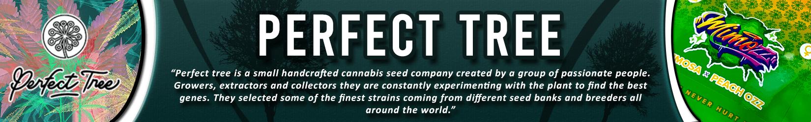 Cannabis Seeds Breeder - Perfect Tree