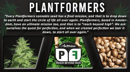 Cannabis Seeds Breeder - Plantformers