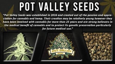 Cannabis Seeds Breeder - Pot Valley Seeds