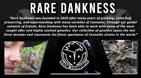 Cannabis Seeds Breeder - Rare Dankness