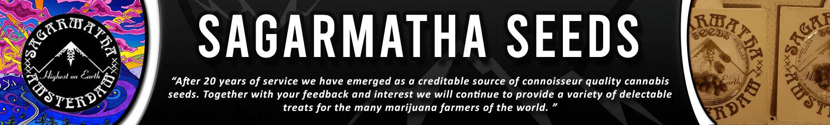 Cannabis Seeds Breeder - Sagarmatha Seeds
