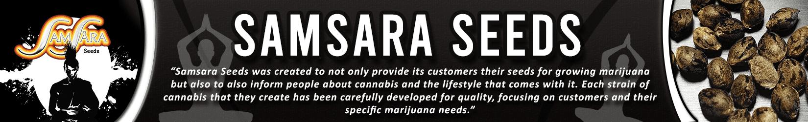 Cannabis Seeds Breeder - Samsara Seeds