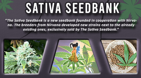 Cannabis Seeds Breeder - Sativa Seedbank