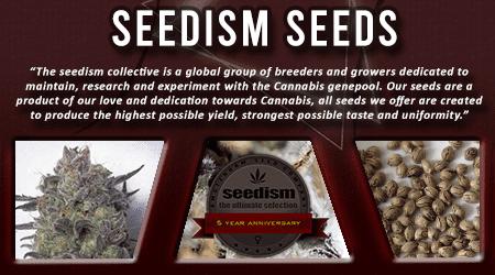 Cannabis Seeds Breeder - Seedism Seeds