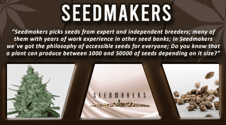 Cannabis Seeds Breeder - Seedmakers