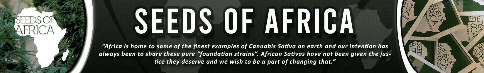 Cannabis Seeds Breeder - Seeds Of Africa