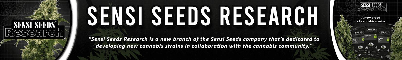 Cannabis Seeds Breeder - Sensi Seeds Research