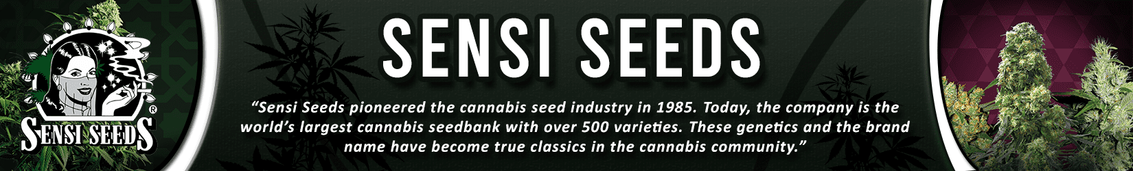 Cannabis Seeds Breeder - Sensi Seeds