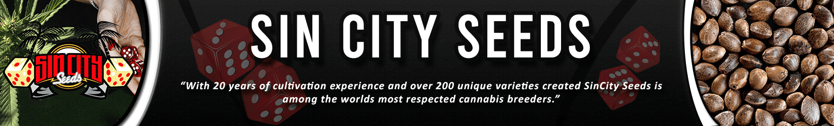 Cannabis Seeds Breeder - Sin City Seeds