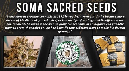 Cannabis Seeds Breeder - Soma Seeds