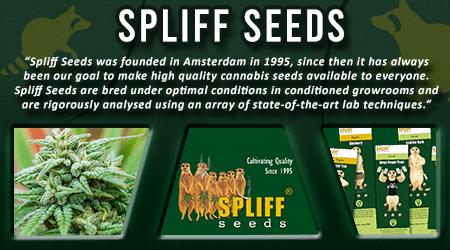 Cannabis Seeds Breeder - Spliff Seeds