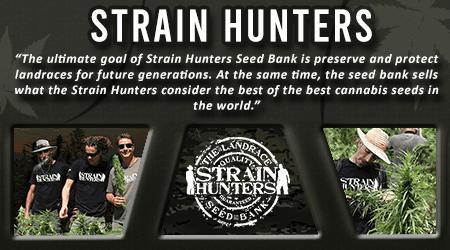 Cannabis Seeds Breeder - Strain Hunters