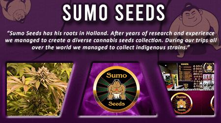 Cannabis Seeds Breeder - Sumo Seeds