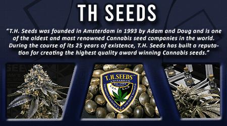 Cannabis Seeds Breeder - TH Seeds