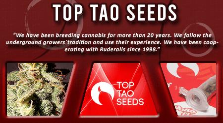Cannabis Seeds Breeder - Top Tao Seeds
