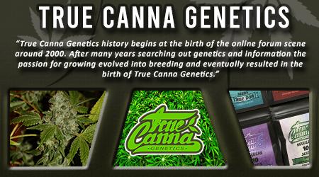 Cannabis Seeds Breeder - True Canna Genetics