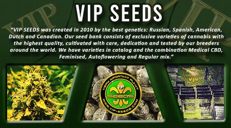 Cannabis Seeds Breeder - VIP Seeds