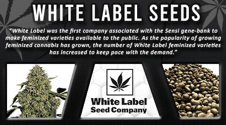 Cannabis Seeds Breeder - White Label Seeds