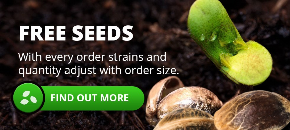 Free Cannabis Seeds With Every Order