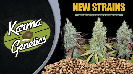 Karma Genetics Cannabis Seeds Special Offer