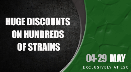 Huge Cannabis Seed Discounts