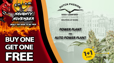 Dutch Passion Cannabis Seeds Special Offer