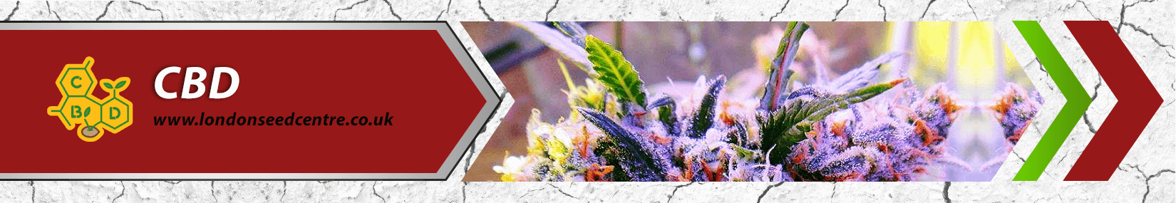 Cannabis Seeds Breeder - Sweet Seeds